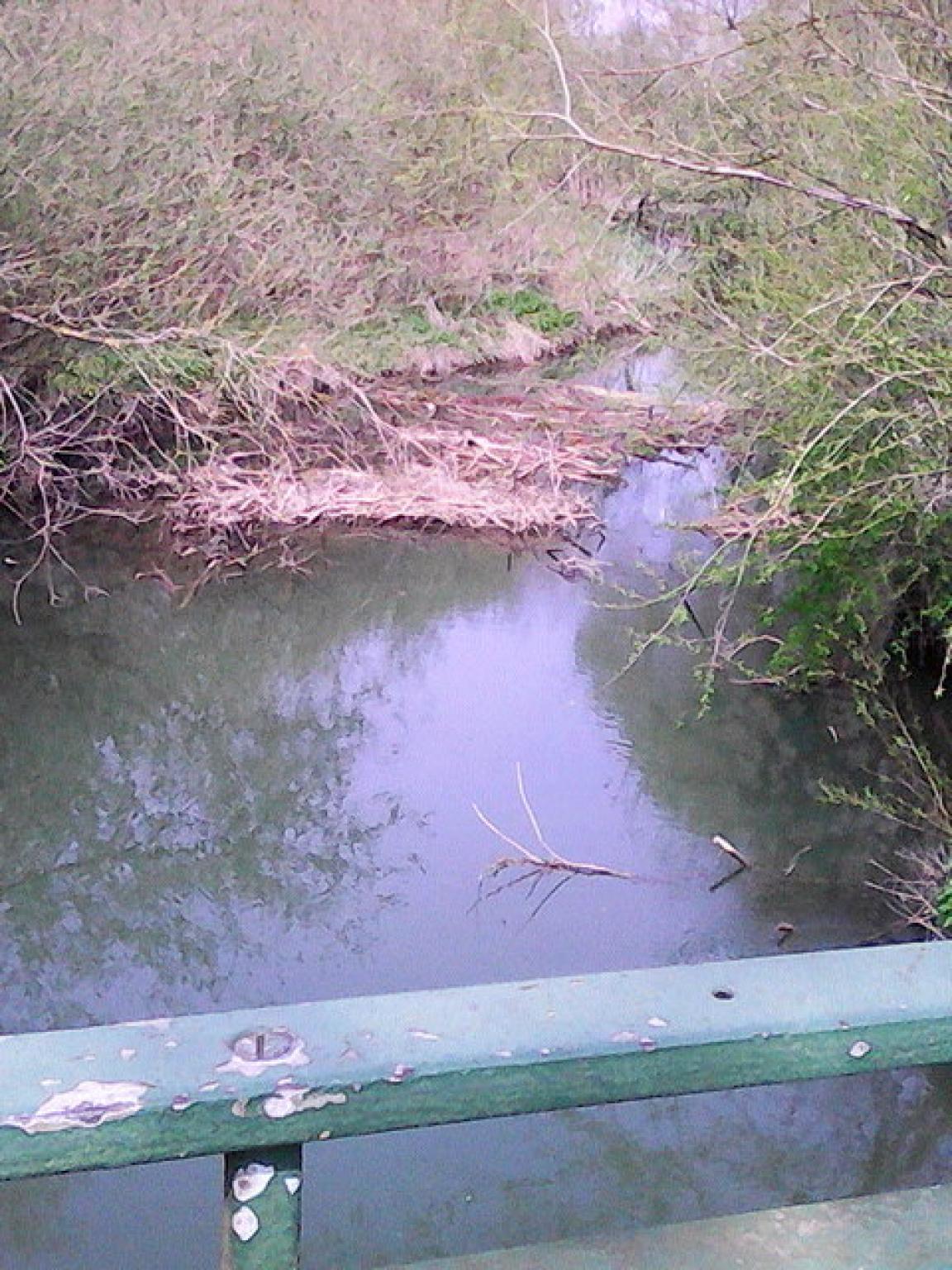 Pollarded trees in Bulstake stream