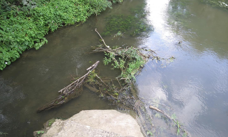 Logs in Bulstake stream